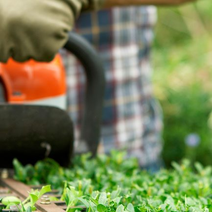 Dependable Lawn Pros - Bush and Shrub Trimming