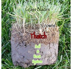 Thatch can prevent your lawn's root system from receiving water, nutrients and oxygen